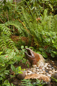 Salmon statue surrounded by Western Sword Fern, Salal and Oregon Grape in a shady garden