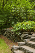 Stone wall and steps leading to a patio, next to Bishop's Hat plant (by the steps) in a shady yard