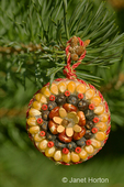 Christmas ornament made of corn, seeds and spices glued to a wooden base made by Marilyn Romatka
