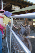Woman holding toddler girl who is petting a Mediterranean miniature donkey at Baxter Farm