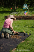 Woman, Jenni, planting pepper garden in ground covered with black cloth to help prevent weeds, at a farm