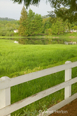 White wood fence, tall weeds, shrubs &amp; trees around farm pond and house at River Run Ranch.  This provides natural wildlife habitat.  
