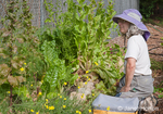 Woman, Linda, taking a break from harvesting her garden, at the community pea patch