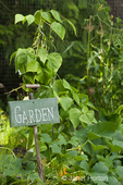 Garden sign on old shovel handle, with wax beans, corn and pumpkins growing at a Pea Patch community garden