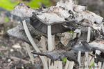 Garden mushroom growing in a community pea patch garden