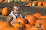 Young boy sitting by group of pumpkins at a pumpkin patch