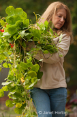 Woman, Barb, carrying weeds and unwanted nasturtium plants in autumn to a compost pile at a community pea patch garden