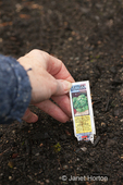 Placing Buttercrunch Lettuce plant ID tag in the ground at a community pea patch garden