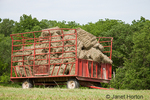 Wagon-load of baled hay, waiting to be taken to the barn