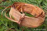 Roll of pliant Western Red Cedar inner bark, lying on Western Red Cedar branches