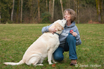 6 year old English Yellow Labrador, Murphy, affectionately licking his owner, Chrissy, in a park in Western WA