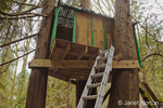 Treehouse in woods on rural property with ladder going up to it