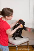 Woman, Thea, brushing the teeth of her one-eyed dog, Frank
