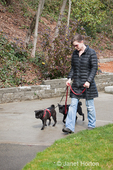Woman walking her two black Pugs in an urban park