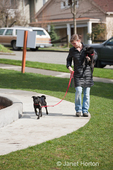 Woman walking one Pug and carrying another one in an urban park