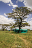 Path leading to luxury mobile camp surrounded by Acacia trees