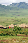 Maasai Village huts and cattle with Maasai man wearing red cloak