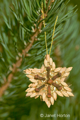 Christmas ornament made of natural seeds and spices glued to a wooden base