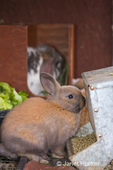 Bunnies in a rabbit cage eating rabbit pellets