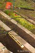 Terraced kitchen garden in spring, with a level showing used for spacing snap pea seeds that are being planted
