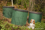 Compost bins at the forested edge of a yard, used to create compost for a kitchen garden, with a Cavalier King Charles Spaniel sitting next to them