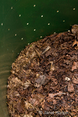 Leaves in a compost bin, used to create compost for a kitchen garden