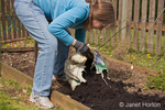 Woman, Kath, adding compost to a small kitchen garden