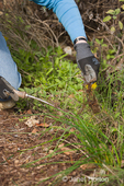 Woman using a weed digging tool to remove weeds from weedy garden