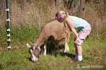 Girl looking at Toggenburg goat which is eating grass in the pasture at Dog Mountain Farm