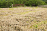 Hay field after mowing, drying before being harvested
