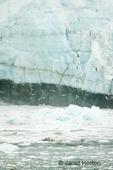 Marjorie glacier with flock of sea gulls