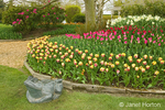 Frog Statue and raised bed of El Cid tulips in the foreground