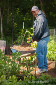 Man shoveling mulch onto vegetable garden in a community garden