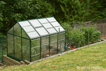 Greenhouse and kitchen garden with tomato plants visible, growing next to a woods