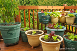 Lettuce and cherry tomatoes growing in containers on a wood deck