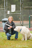 Woman cleaning up poop while walking Murphy, an English Yellow Labrador dog outside near a tennis court