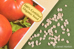 Close-up of organic Burpee Brandywine Red tomato seeds and seed packet in a studio setting