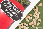 Close-up of Burpee's Big Boy Hybrid tomato seeds and tomato seed packet in a studio setting