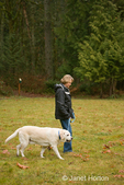 Murphy, English Yellow Labrador Retriever, walking nicely on-leash in a park