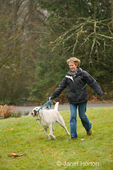 Murphy, English Yellow Labrador Retriever, tugging on his leash while walking off-leash with his owner in a park