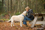 Murphy, English Yellow Labrador Retriever, affectionately giving a kiss to his owner in a park