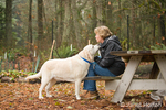 Murphy, English Yellow Labrador Retriever, affectionately cuddling with his owner in a park