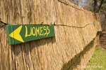 Humorous lionness (for women) sign on a thatched hut bathroom