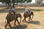 Tourists and game guides riding on two elephants