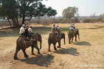 Tourists and game guides riding on three elephants