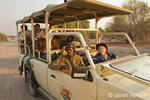 Tourists in safari vehicles