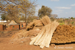 Pile of bundles of thatching grass to make a thatched roof at the Chiawa Cultural Village