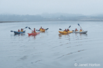 People in five kayaks paddling in Elkhorn slough in early morning with cloudy, stormy weather