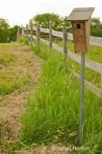 Bluebird house next to fence in orchard grass / alfalfa mix hay field in a rural area
