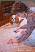 Woman cleaning up potty acccident of Mandy, a Cavalier King Charles Spaniel, using an enzyme cleaner